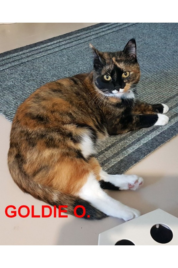 Goldie O